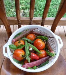August_08_12_harvest (pitownsend) Tags: nature tomatoes sage basil okra homegrown jalapenos southernnc