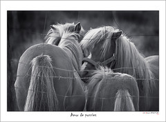 Amor de ponnies (Jabi Artaraz) Tags: naturaleza nature animal fauna fence caballos amazing gorgeous natur natura pony zb lovely trío animaliak ponnies cercado beautifulearth supershot euskoflickr fineartphotos fantasticnature abigfave superaplus aplusphoto flickrbest impressedbeauy behorrak diamondclassphotographer flickrdiamond excapture jartaraz bestofblinkwinners blinksuperstars