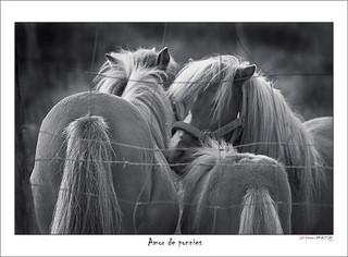 Amor de ponnies