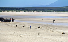 Off and running (Frank Fullard) Tags: ireland irish dog beach festival strand race mayo doolough dogracing erris fullard geesala frankfullard