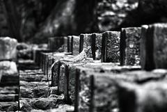 Lizard (focal) Point (Mister Blur) Tags: heritage stairs point mexico site nikon ruins dof yucatan depthoffield lizard mayan ruinas lagarto mayas uxmal escaleras sitio focalpoint distancia xtoloc d60 focal escalinatas mrblur yucatán méxico rocoeno histórico snapseed