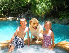 7915332694 2992c558c9 m Hercules, Photos of my fun Yellow Labrador