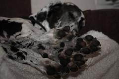 Njutning (PiaLiz) Tags: paws njutning tassar fotosondag fs120902