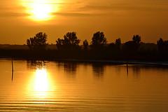 golden sunset (pdwain) Tags: elementsorganizer