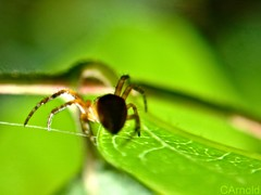 garden spider (justyourcofchi) Tags: colour green nature up model flickr fuji photographer close finepix environment loupe chiarnold justyourcupofchicom justyourcupofchi