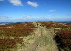 a Rozsály tető / road on the hilltop (debreczeniemoke) Tags: road autumn landscape hilltop bilberry tájkép út ősz feketeáfonya rozsály canonpowershotsx20is hegytető igniş