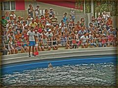 (cod_gabriel) Tags: show pool seaside crowd romano romania delfin litoral romanian constanta roumanie rumano delfini bazin rumanos dolphinshow spectacol dobrudja dobrogea constanţa romanianseaside romenos delfinariu dobruca rumänen dobruja litoralulromanesc spectatori mulţime litoralulromânesc dophinarium