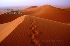 Prints in the desert sands, Merzouga dunes (Malc ) Tags: sahara photo sand desert photos dunes dune steps footprints morocco maroc getty footsteps gettyimages stockphoto erg merzouga erfoud rissani ergchebbi chebbi saharan photosof footprintsinsand footstepsinthedesert malcc malcolmchapman mygearandme mygearandmepremium mygearandmebronze mygearandmesilver mygearandmegold mygearandmeplatinum mygearandmediamond desertprints desertfootprints footprintsinthedesert footprintsinthedesertsand footprintsindesert malcolmpchapman stepsindunes