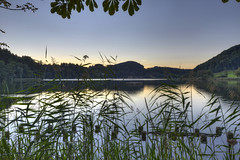 Reed at Trlersee (Daniel J. Mueller) Tags: sunset lake reflection reed forest landscape schweiz switzerland see sonnenuntergang hill landschaft wald spiegelung hdr schilf hgel kantonzrich 7xp trlersee cantonofzrich trlen d800e