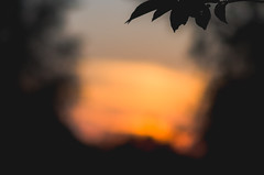 Summer Bokeh (DeShaun Craddock) Tags: nyc newyorkcity sunset newyork landscape bokeh digitalphotography nikond7000