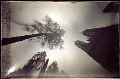 Churchyard perspective (batuda) Tags: trees church pinhole d76 6x9 glassplate cadboardbox