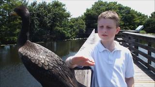 Cormorant Encounter