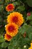 ALG_6498 (nikontino) Tags: 네덜란드 네덜란드에서 아름다운 꽃은 한국의 사진 작가로 일을 찾고 funghi mushroom paddestoelen schwamm autumn