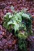Green (McMac70) Tags: film badvilbel film135 nikonl35af2 rossmannhr400