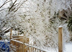 Deck in ice storm 1994-1 (PattiW2008) Tags: ice tree nj