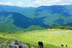 Shikoku Karst (anglo10) Tags: mountain field japan