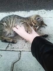 (ladyedit) Tags: animal animals kitty kitties cat