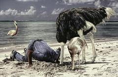Heads In The Sand (clabudak) Tags: ostrich man heads flamingo sea ocean sand hole hiding
