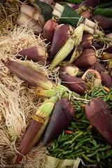 Banana flowers (JohannesLundberg) Tags: monocots burma foodmarket economicbotany musaceae biology musasp myanmar zingiberales musa expedition banan banana unidentified loikaw kayah myanmarburma mm