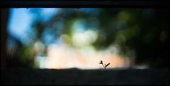 Resilience (Lens Bubbles) Tags: petri 45mm f18 bokeh diy lens