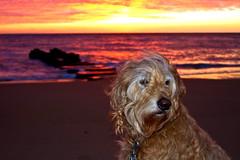 Sleep Well Gentle Soul (Mellon 99) Tags: animals delaware davemellon mellon99photography morning mornings sun sunrises sunsets sunrise nature beach dog dogs emmett pets pet fenwickisland