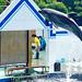 Bottlenose Dolphin, Erie of Shinagawa Aquarium : バンドウイルカのエリー(しながわ水族館)