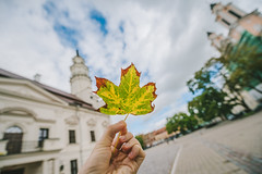 Autumn Leaf | Kaunas #243/365 (A. Aleksandraviius) Tags: hand city autumn leaf kaunas lietuva summer 2016 lithuania europe nikoneurope nikon 1424mm 1424 nikkor 365one dayphoto daypicture 365days d810 nikond810 365 project365 oneaday photoaday pictureaday 243365 3652016