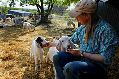 Baby Goats (cherieroshau) Tags: people dunn county may 2015 cherieroshau dickinson