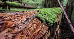 Moss and Log (leyannmeau) Tags: nature natural strathconapark beautiful turtleisland