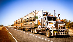 Australian Road Train (Darren Redding - Australian Trucks Barraba NSW) Tags: australia bullbar bush carriage cattle country desert dirt dust dusty freight gemtree haulage highway iconic long lorry outback plentyhwy road roadtrain semitrailer speed tires trailer train transport transportation truck tyres wheels