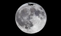 Full Moon September 16, 2016[EXPLORED] (Rodrigo Montalvo Photography) Tags: full moon fullmoon fullharvestmoon september162016 september 16 2016 nikon nikond500 nikon200500mmf56 rodrigomontalvo connecticutphotographer ct nsture nature naturephotography space themoon