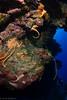 Palancar Reef (jcl8888) Tags: scuba diving cozumel mexico underwater coral nikon d7200 nauticam tokina 1017mm fisheye nature reef palancar diver sea ocean deep blue sponge color travel