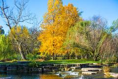 The World of Broken Dreams (Thomas Hawk) Tags: america forestpark missouri mo stlouis usa unitedstates unitedstatesofamerica lake tree trees water fav10