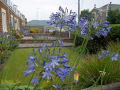 100_0706 (late2lense) Tags: houses grass agapanthus girvan bynehill southparishchurch