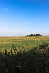 A Field I Stumbled Across Stumbling Home. (frankie091) Tags: trees summer sky abstract green beauty field grass vertical clouds canon landscape eos cool bush corn afternoon farm awesome bluesky greenery serene local bushes 600d canon600d verticalphotography