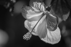 Black and White Flower (Brian Hammonds) Tags: park travel nepal light flower color tourism contrast asian photography photo nikon asia photographer village exploring culture vivid tourist adventure explore national nepalese traveling foreign discovery himalayas chitwan cultural traveler d7000