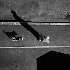 A dog, a man, a house (fabici) Tags: street shadow dog man france up walking square photo bretagne ombre perro hund squareformat 35 rennes 2012 500x500 laisse fabici