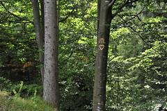 JTL Marina nature wilderness forest countryside Natur Wald Austria (c) 2012 Бернхард Эггер Egger :: eu-moto images - All rights reserved! 9911 (:: ru-moto images) Tags: wald forest tree herz jtl park styria austria steiermark österreich natur nature landscape outdoor image bilder foto photo photography eumoto nikon fx fullformat d700 countryside wilderness 1735 love liebe фото дружба imagination flickrbestpics カメラマン φωτογραφοσ бернхардэггер オーストリア rumoto австрия россия европа النمسا themostbeautifulcountry русскоегеографическоеобщество