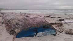 Asilomar Beach (sgr79) Tags: california beach surf asilomar