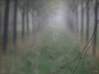 Cobweb on a Misty Morning