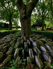 Hardy Tree (Vide Cor Meum Images) Tags: tree london history church st fuji cross thomas rail literature graves kings burial railways cor pancras hardy vide stations hs20 consecrated meum markcoleman hs20exr mac010665yahoocouk videcormeumimages ilobsterit