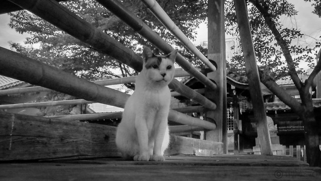 Today's Cat@2012-09-02