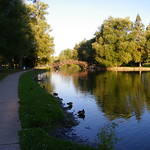 Swans, Ducks and Geese along the Avon River (Stratford, Ontario, Canada) thumbnail