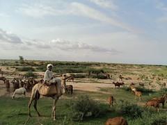 (good sudanese) Tags:
