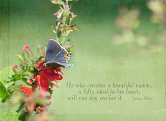 from the garden (champbass2) Tags: northerncalifornia butterfly quote text textures hairstreak fromthegarden calfiornia cardinalsage champbass2 kimklassen beyondlayersii imagewithaquote butterflyandquote textureandaquote
