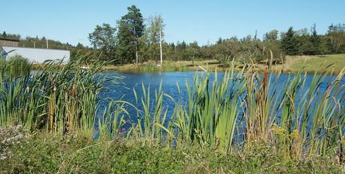 Holding pond