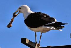 Seagull (bolilje) Tags: all xpress allxpressus