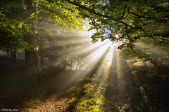 In the woods (Buckles Photos) Tags: trees light woods woodlands cumbria shafts