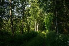 My Paths, My Heart (grus_p) Tags: mypathsmyheart forest summer evening sunlight july green trees nature countryside calmness beautyofcalmness luminanceborale finland nikon