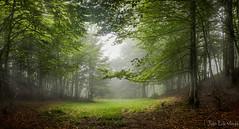 Un rincon bajo el Midi France (juan luis olaeta) Tags: nature forest photoshop canon panoramicas photomerge lightroom hayedo nieblas paisages